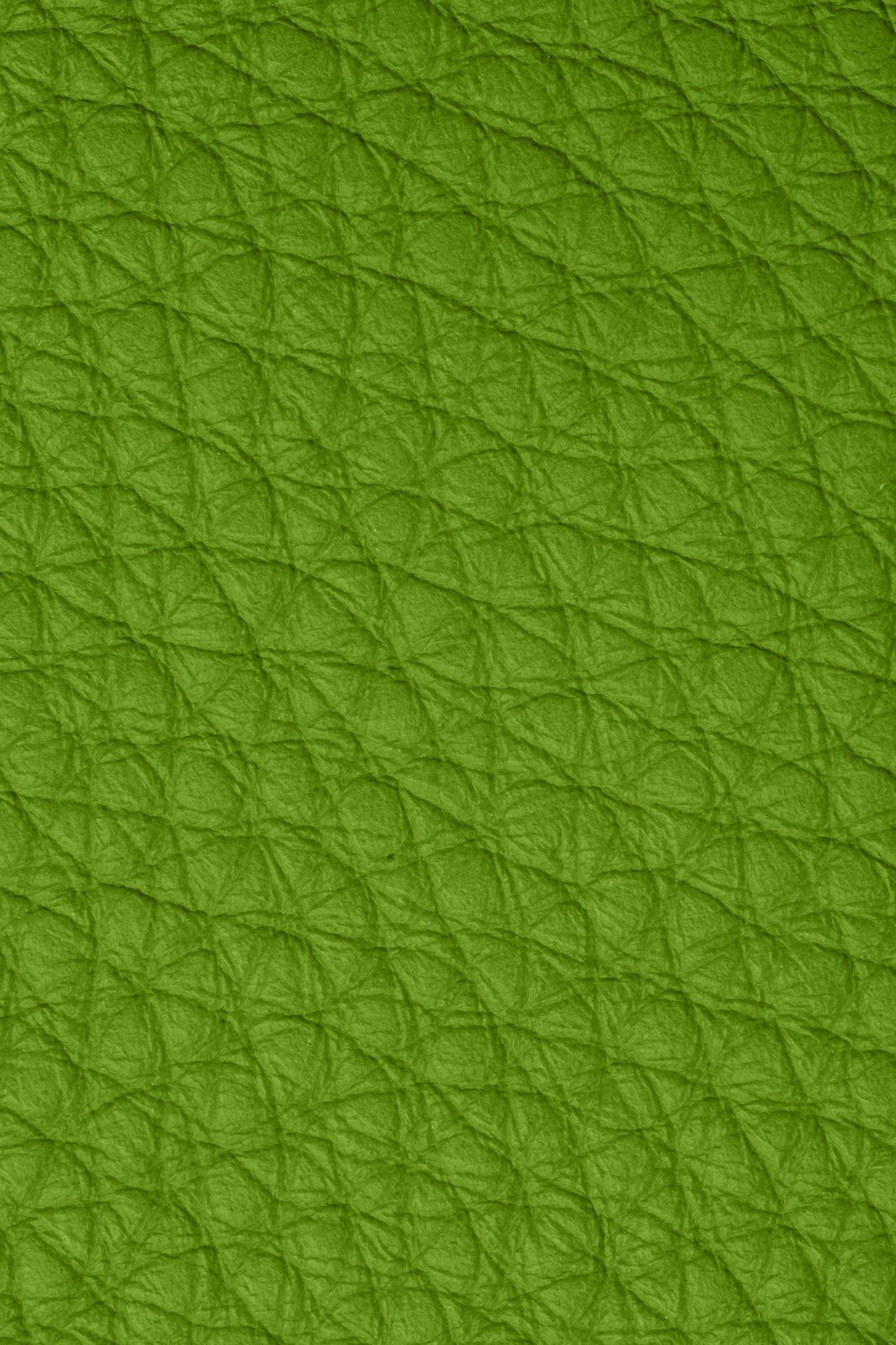 Bison Evergreen